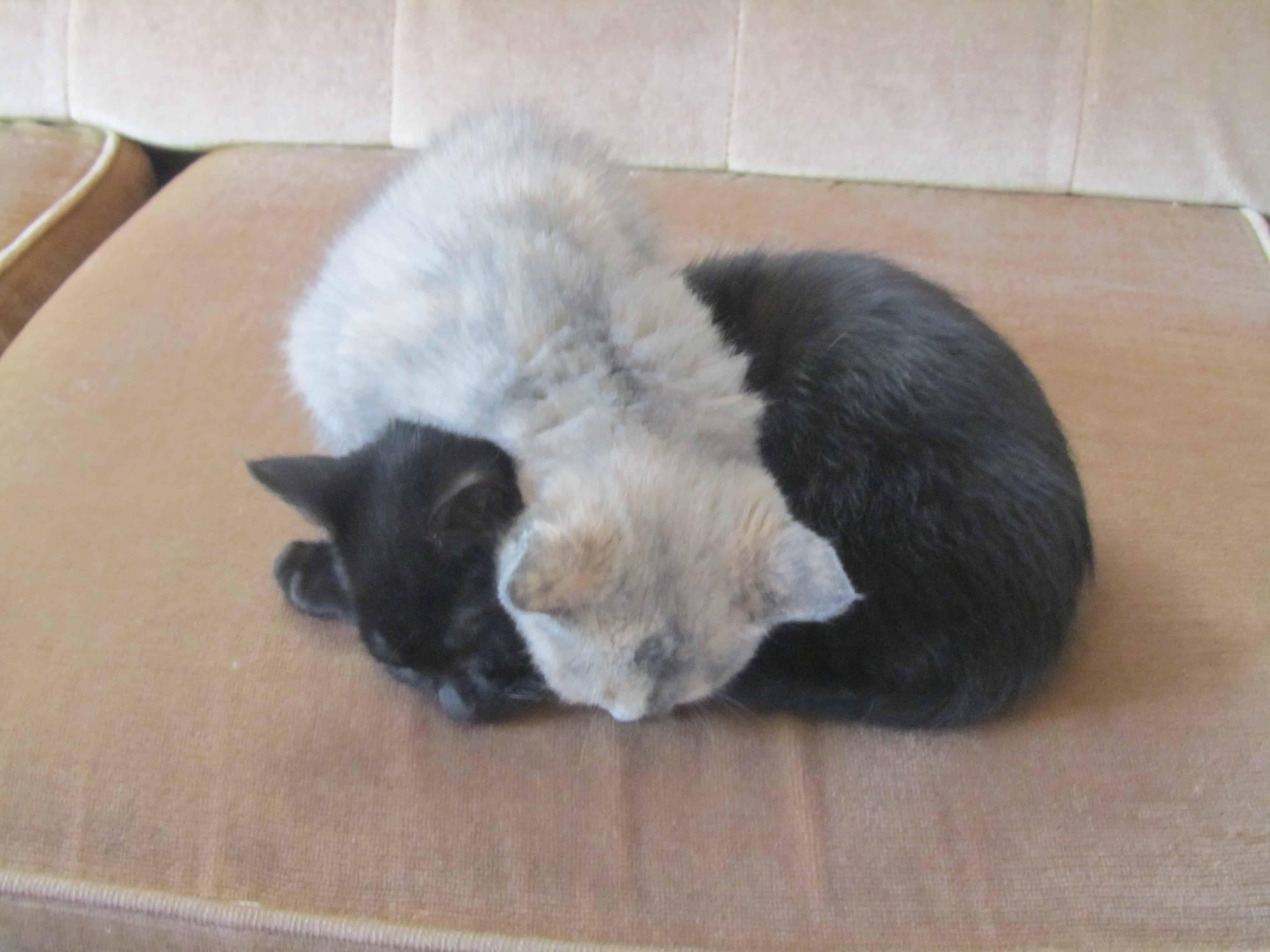 Yep...they sleep like this!