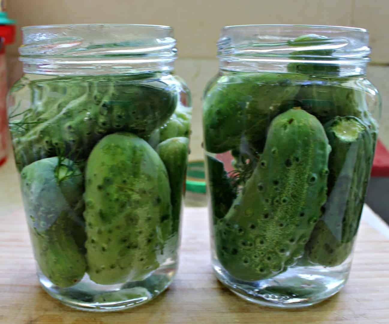 Homemade crunchy, tangy bottled gherkins
