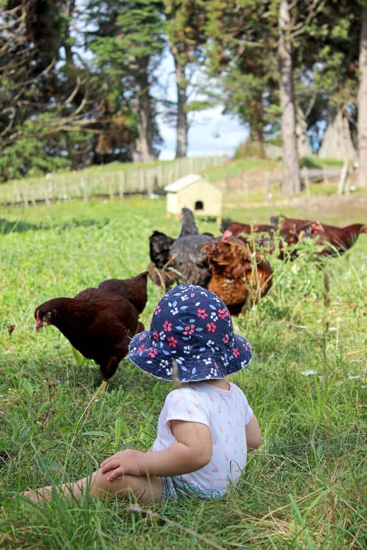 Baby sitting in paddock looking at chickens