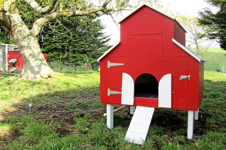 Red barn coop in paddock under oak tree