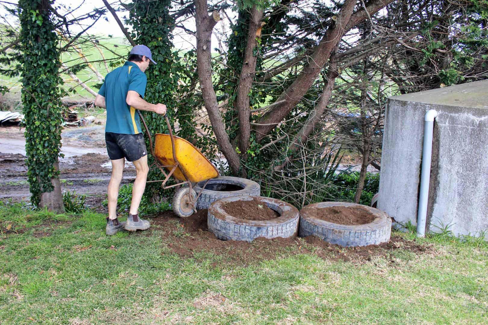 Planting raspberries (4)