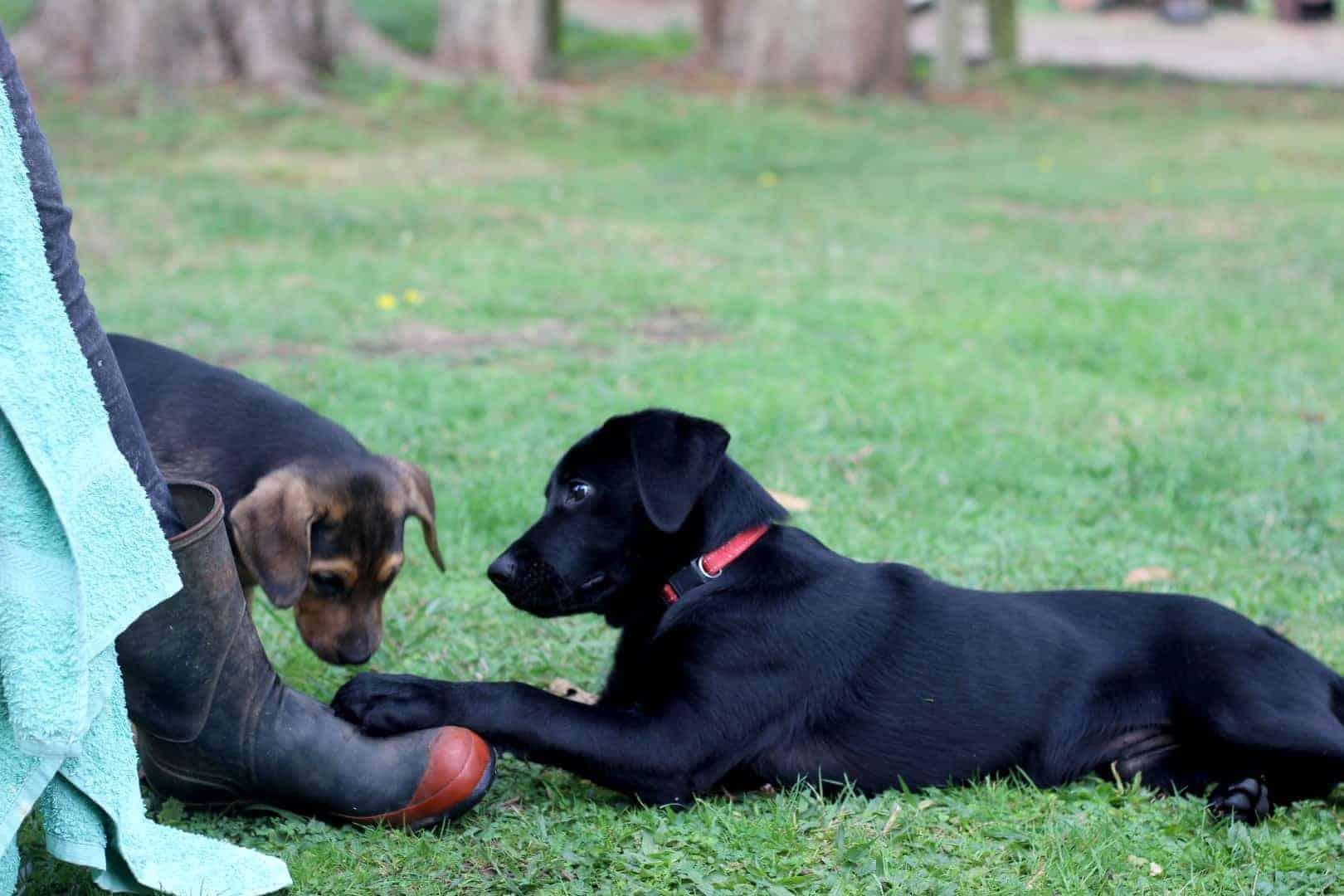 Sage & Tilly | thekiwicountrygirl.com