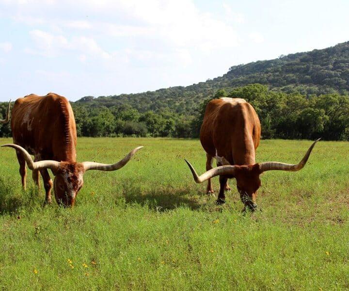 Part 1 of our epic honeymoon adventure - the great Southern USA Roadtrip - Texas!   thekiwicountrygirl.com
