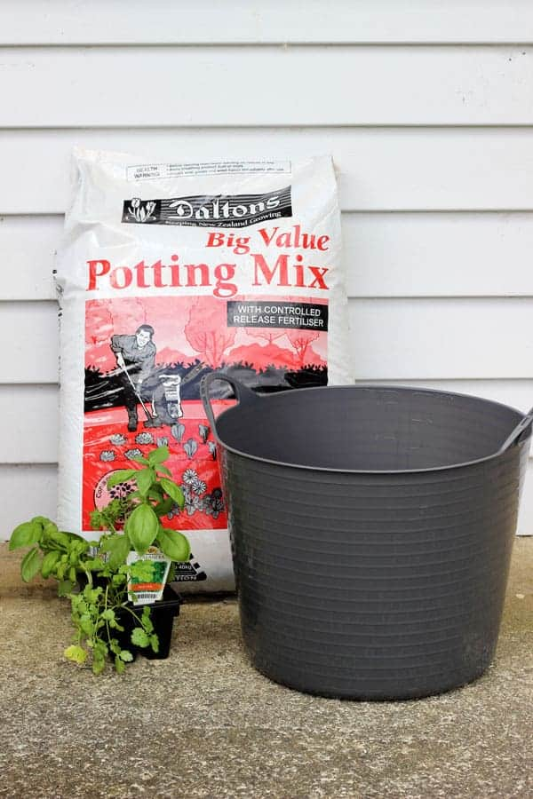 How to start a herb garden for less than $11. Full tutorial on the materials you need, how long it will take and a few handy hints about growing herbs. | thekiwicountrygirl.com