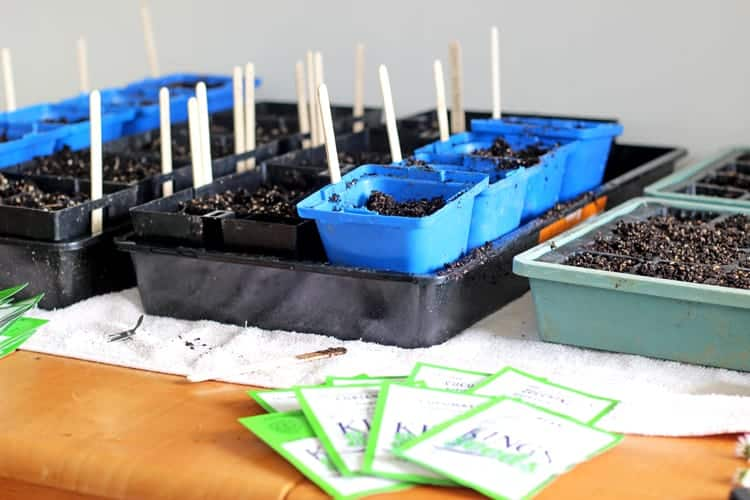 Seedling trays with seed packets on the table