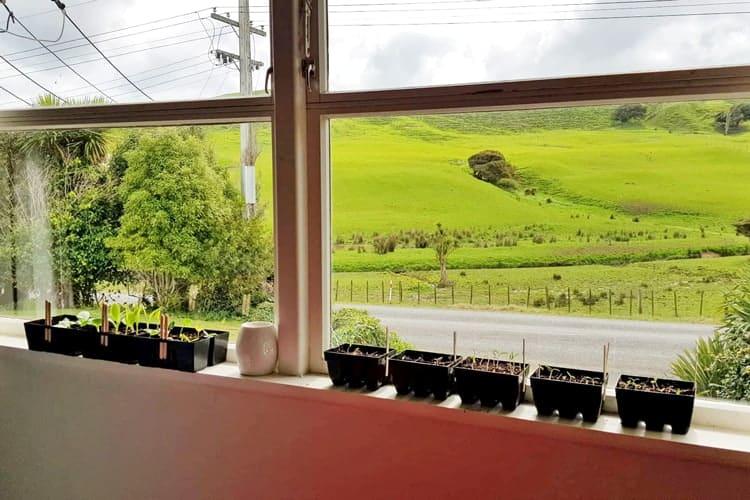 Seedling trays on a sunny windowsill