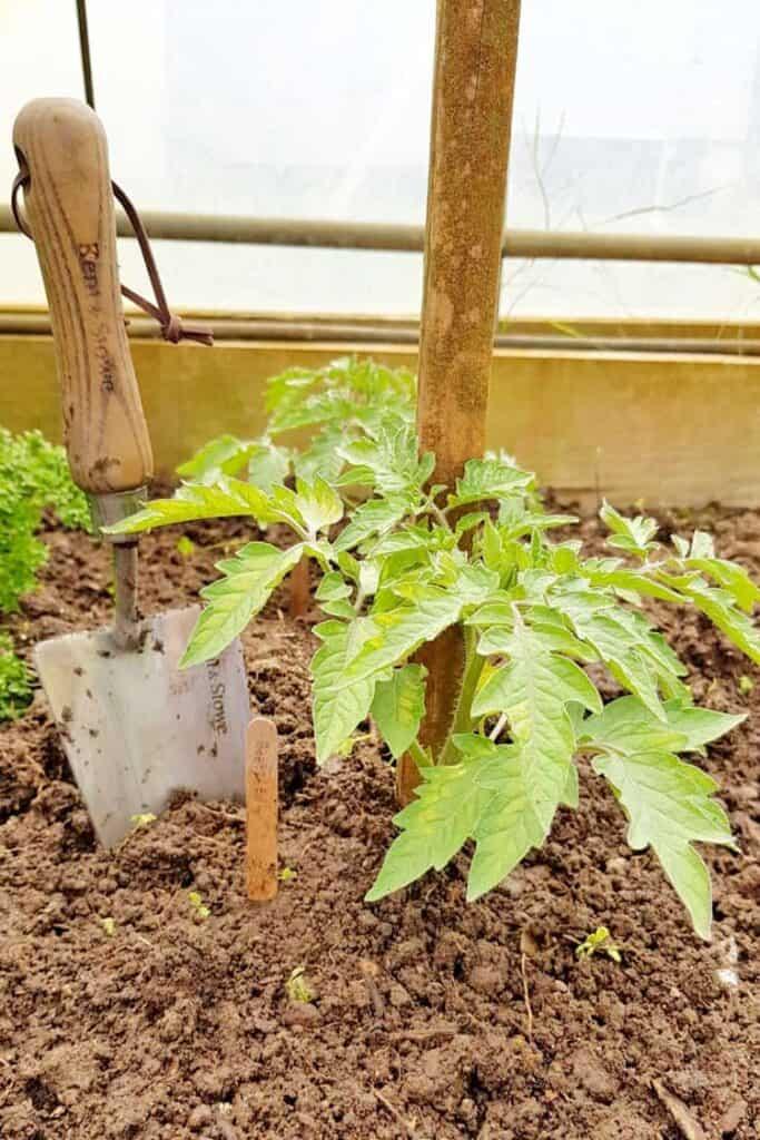 How To Transplant Seedlings